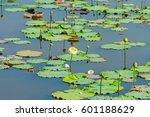 selective focus of lotus flower ... | Shutterstock . vector #601188629