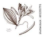 vector hand drawn illustration... | Shutterstock .eps vector #601203791