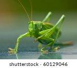 Close Up Shot Of A Grasshopper...