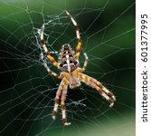 Close Up Photo Of Cross Spider...