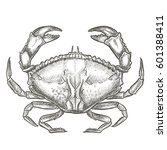 seafood crab hand drawn vector... | Shutterstock .eps vector #601388411