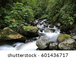Stream In The Cloud Forest....