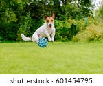 bouncing dog playing at back... | Shutterstock . vector #601454795