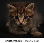 small cat | Shutterstock . vector #60149410