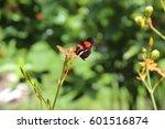 butterflies   Shutterstock . vector #601516874