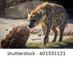 wild hyena searching for prey... | Shutterstock . vector #601531121