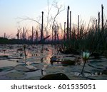 Sunset At The Pond. Sunset At...