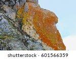 Antarctic Lichens