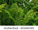 fern growing in the summer... | Shutterstock . vector #601660181