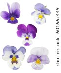 Set Of Pansy Blooms Isolated O...