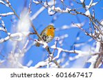 Cute Bird Robin. Winter Birds....