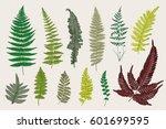 set ferns. 12 leaves. vintage... | Shutterstock .eps vector #601699595