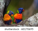 colourful couple. on a tree two ... | Shutterstock . vector #60170695