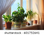 potted green plants on window | Shutterstock . vector #601752641