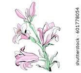Hand Drawn Flowers Lilies On A...