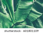 tropical leaves texture... | Shutterstock . vector #601801109