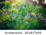 a bush of fresh grass with dry...   Shutterstock . vector #601817609