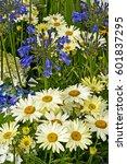agapanthus and leucanthemum...   Shutterstock . vector #601837295