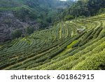 tea plantation landscape | Shutterstock . vector #601862915
