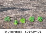 Three Leaf Green Clover On...