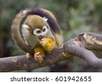 Monkey With Tail Framing Head...