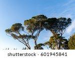 Trees In Pincian Hill Overlook.