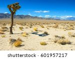 Lone Joshua Tree In Mojave...