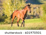 horse in field | Shutterstock . vector #601970501