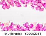 flower petals.   Shutterstock . vector #602002355