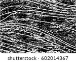 background black and white... | Shutterstock .eps vector #602014367