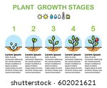 plant growth stages... | Shutterstock .eps vector #602021621