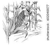 ears of corn in a field in... | Shutterstock .eps vector #602040077
