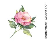single flower. watercolor... | Shutterstock . vector #602045477