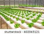 grow vegetable in greenhouse... | Shutterstock . vector #602065121