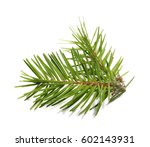 pine branch isolated on white... | Shutterstock . vector #602143931