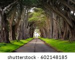 beautiful cypress tunnel on the ...   Shutterstock . vector #602148185