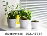 three plants on the white... | Shutterstock . vector #602149364