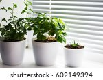 Three Plants On The White...