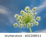 White Blossoms Cute Flower