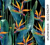 watercolor strelitzia seamless... | Shutterstock . vector #602246249