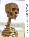 Model Brain Human Respiratory...