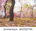 ume blossom | Shutterstock . vector #602292749
