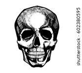 vector portrait of human skull. ... | Shutterstock .eps vector #602380595
