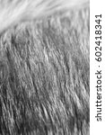 Closeup Shot Of Grey Fur With...