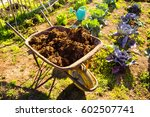 Manure And Vegetable Garden