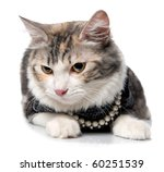 cat on a white background ... | Shutterstock . vector #60251539