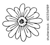 daisy flower on white... | Shutterstock .eps vector #602556989