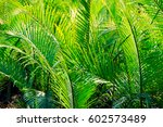 close up of palm in palm in... | Shutterstock . vector #602573489