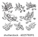 coffee grains and leaves in... | Shutterstock .eps vector #602578391