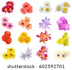 Stock photo flower bouquet seasonal various flowers isolated 602592701